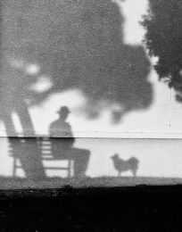 Bench and Shadow Dog