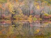 Along the Contoocook River, Autumn, NH