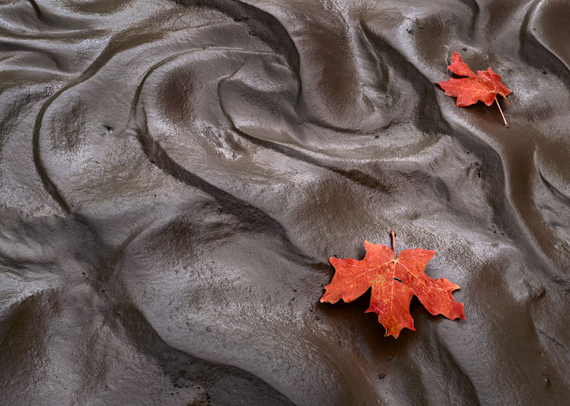 Maple Leaves, Mud, Clear Creek, Zion Nat'l Park