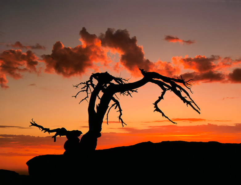 Storm Clouds at Sunset, Jeffrey Pine on Sentinel Dome, Yosemite