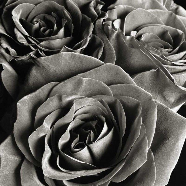 Black Rose II