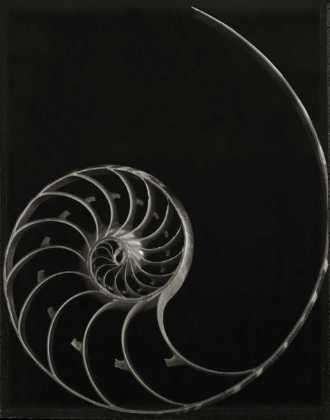 Nautilus Skeleton