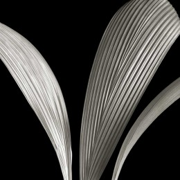 Ribbed Leaves II