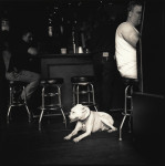 Bulldog and it's Owner, New Orleans