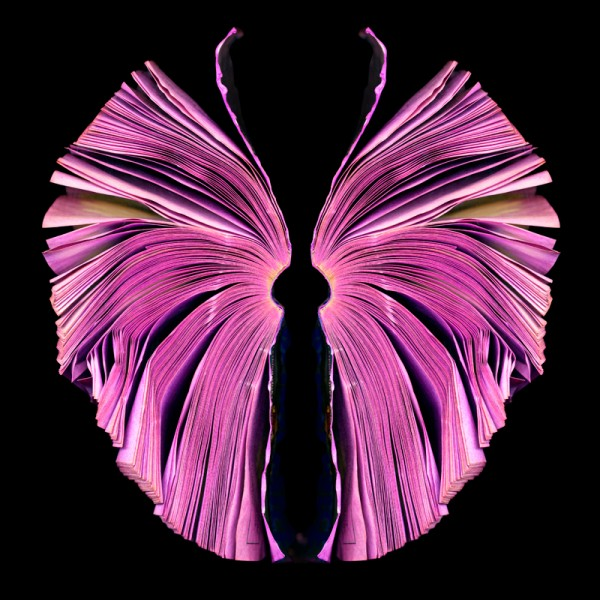 Pink Butterfly (A)