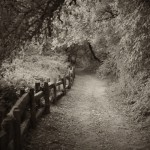 Path, Henry Cowell Park