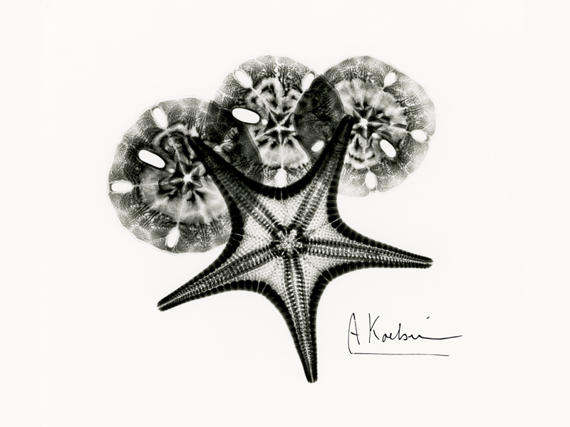 Starfish and Silver Dollars