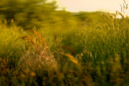 Early Spring Grasses