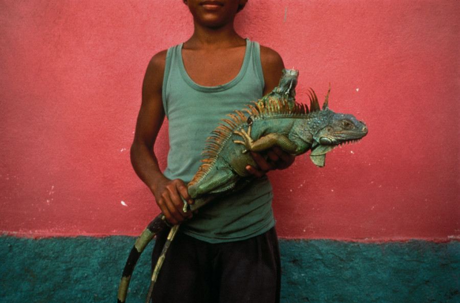 Boy with Iguana, Kilometro, Honduras