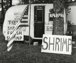 Call Dot for Shrimp