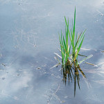 Spring Grass and Rainpool, OR