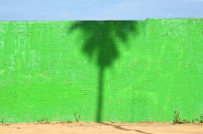 Palm Shadow