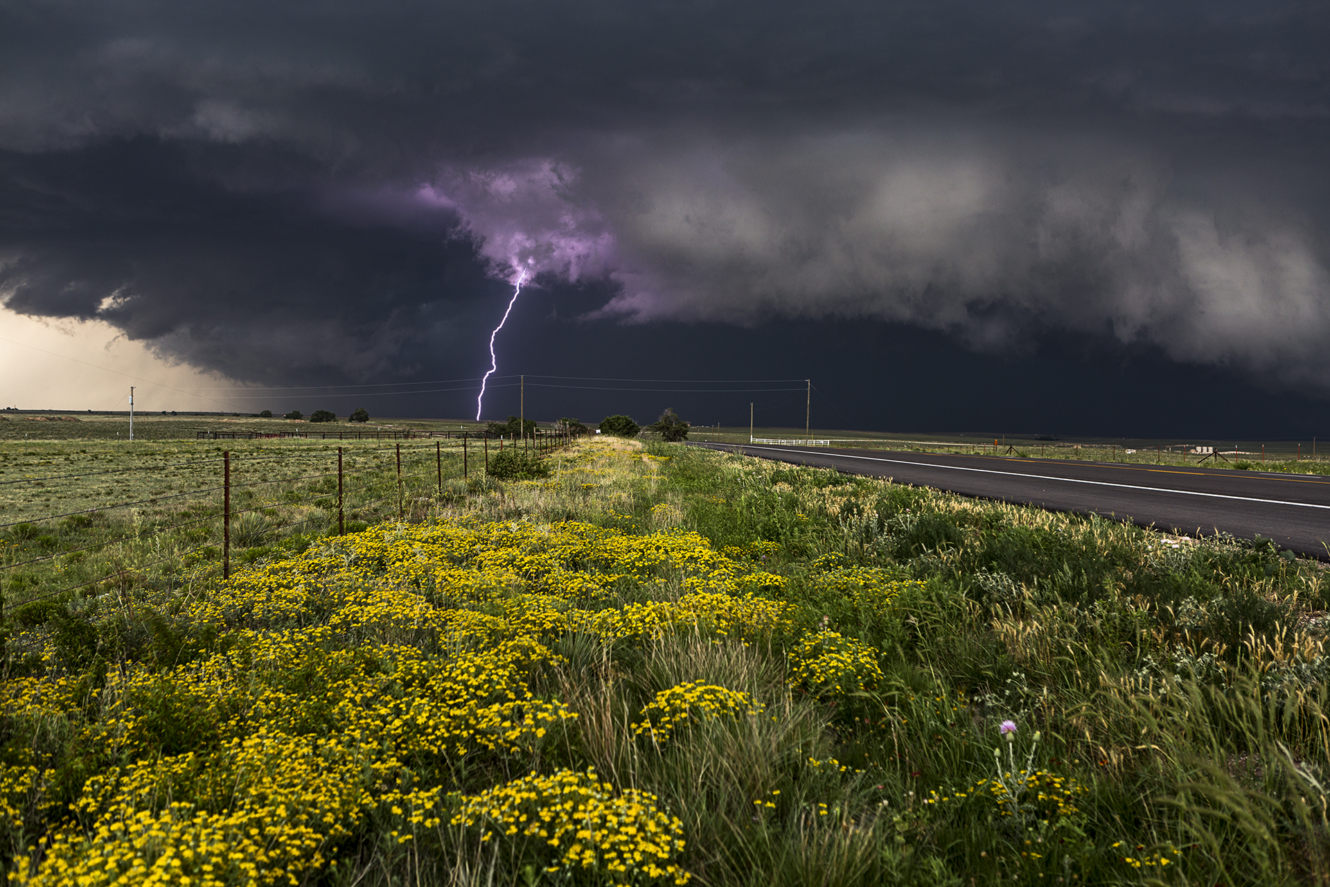 Purple lightning canadian tx by camille seaman susan for Lightning landscape