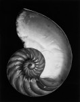 Nautilus Shell: Negative by Edward Weston, Print by Cole Weston