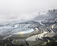 Rice Terraces, Duiyishu, Yunnan, China
