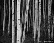 Aspen, Forest, Dusk, Near Aspen, CO
