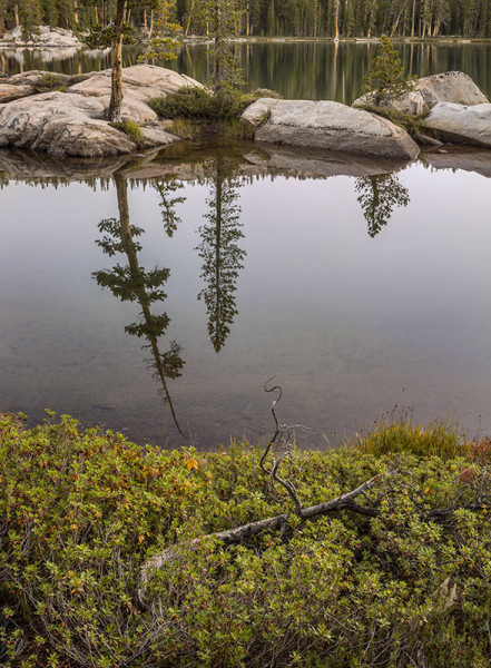 Islands and Tree Reflections, Yosemite
