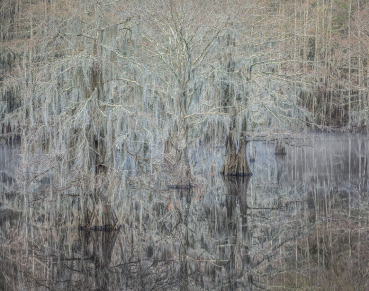 Misty Morning, Cypress Trees, Caddot Lake, TX