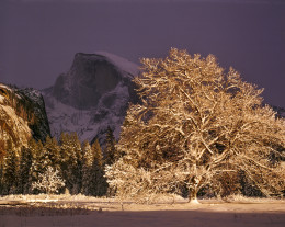 Half Dome and Elm Tree, Winter, Yosemite National Park