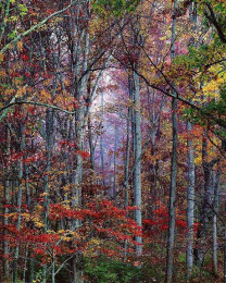 Glowing Autumn Forest, Virginia
