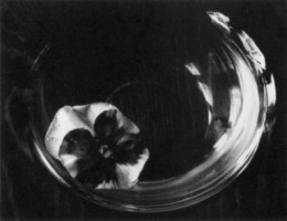 Pansy in Bowl, Kentucky: Paul Caponigro