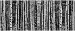 Trees in Exchange, Autumn, California Eastern Sierras – Triptych