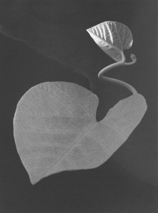 Untitled, Winthrop, MA: Paul Caponigro