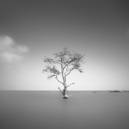 Mangrove, Tree of Hope