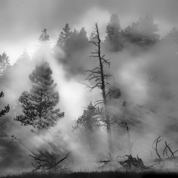 Morning Dance, Yellowstone National Park