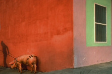 Pink Pig and Painted Walls, Mexico