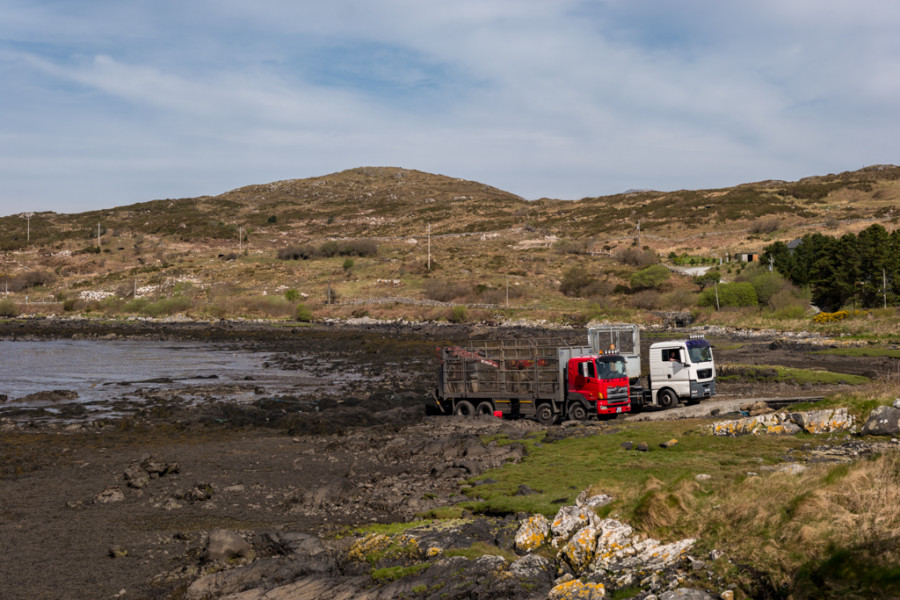 Waiting for the Tide, near Roundstone