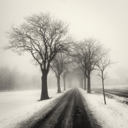 Fog and Snow, Sweden