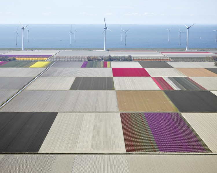 Tulips and Turbines 01