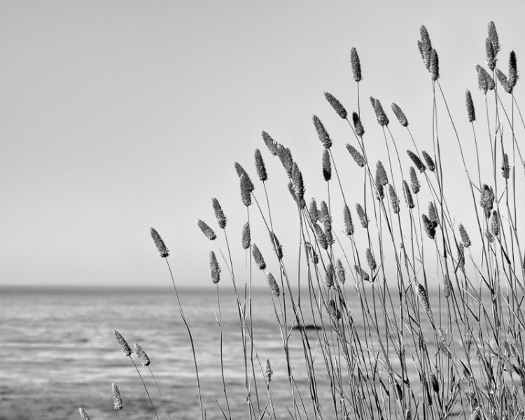 Sea Grasses No. 2