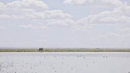 Elephant on the Horizon, Amboseli