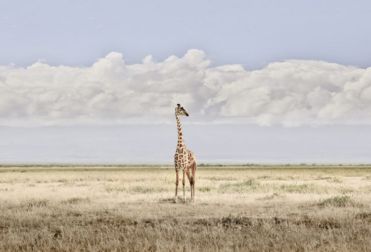 DB_Head-in-the-Clouds-Amboseli-Kenya-2019-2-1080x608