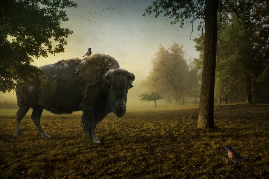 The Bison