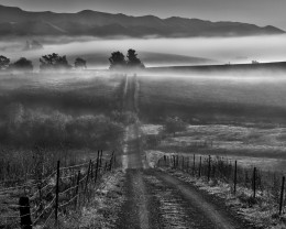 Morning Fog and Country Road