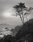 Misty Morning, Trinidad Coast