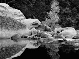 Boulders, Tree, Merced River, Yosemite National Park (Sold)