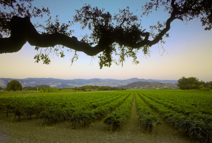 Napa Valley Vineyard