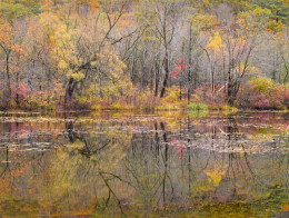 Along the Contoocook River, Autumn, NH