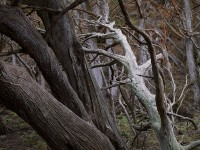 Cypress Forest, Point Lobos Reserve