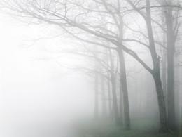 Dawn Fog, Shenandoah, Virginia