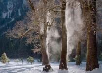 Mist Steaming from Oaks, Winter, Yosemite Valley