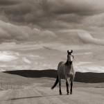Horse & Sky, Laramie River Road, CO (sold)