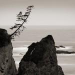 Lean Unto Me, Coos Bay, OR (A)