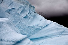 Iceberg Detail with Glaucous Gulls, East Greenland