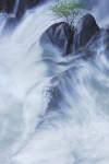 Rock, Water & Tree, Cascade Falls