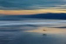 Sandpiper at Sunrise, Santa Monica